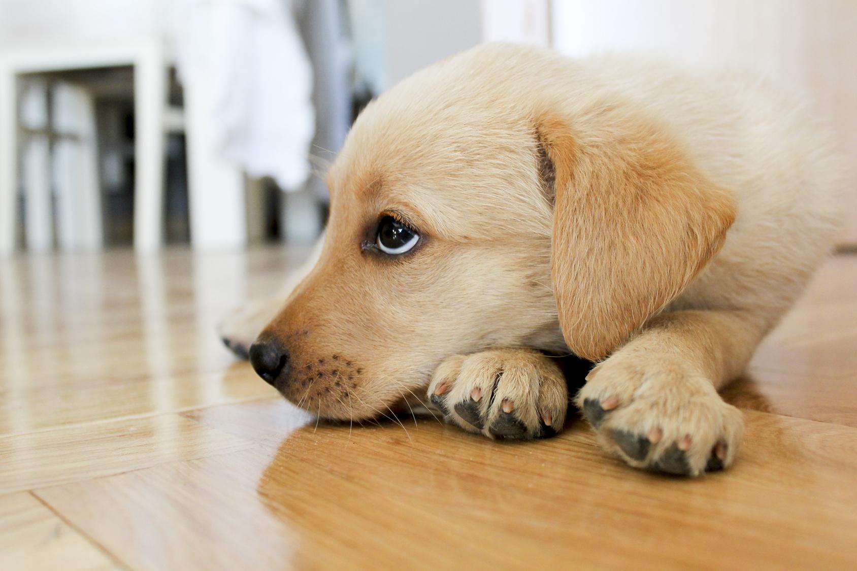 愛犬が腎不全になったら