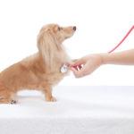 【獣医師監修】犬の心臓病って?種類や原因と治療法、余命、食事について