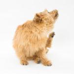 【獣医師監修】愛犬が皮膚病になったら?その症状と原因、種類について