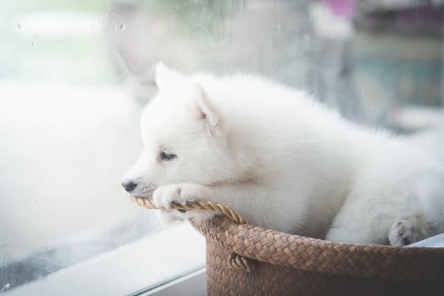 犬の急性膵炎