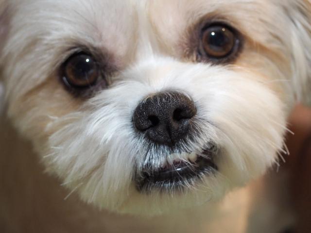 犬の乳腺腫瘍