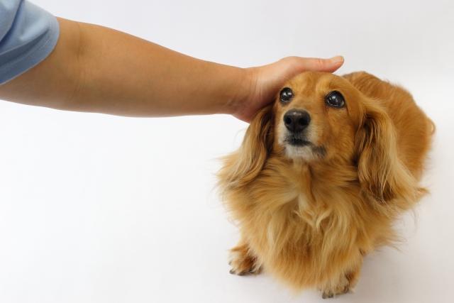 犬の血液検査ALP