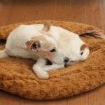 犬の慢性腎不全の症状、原因と治療法、食事と余命について