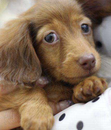 犬の血液検査BUN値