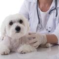 犬のリンパ腫