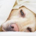 犬の骨肉腫