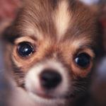犬の目の病気