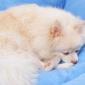 犬の血液検査SDMA