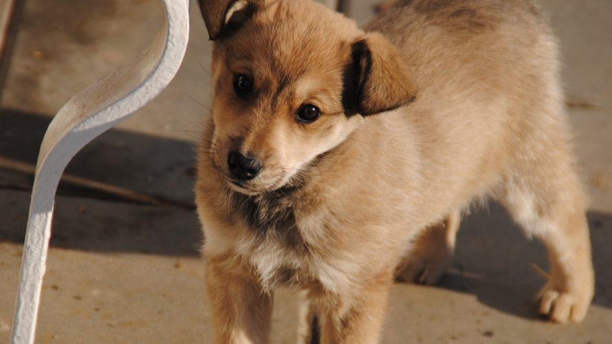犬の熱中症はすぐに対処しないと危険!症状別の対策と予防法