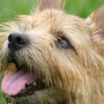 犬の脂肪腫とは?症状と手術・治療法の知識