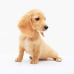 愛犬の後ろ足が震える原因は?対処法と注意すべき病気