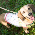 犬の便秘はフードが原因かも?予防と対策、病院にいく判断は?
