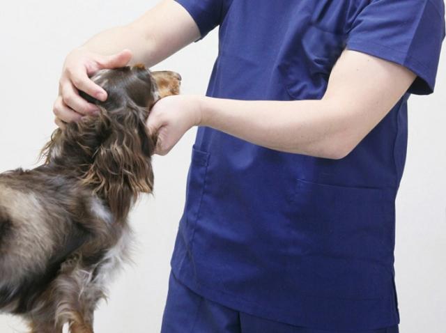 犬の血液検査CRP