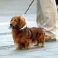 夏の犬の熱中症対策