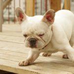 犬が吐く時の理由とは?嘔吐の原因と対策