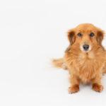 犬のアジソン病の原因や症状とは?検査と治療、食事について