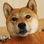 【犬の痴呆症】原因や症状、有効な対処、予防法とは?