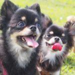 犬を多頭飼いする時のメリットと注意点まとめ
