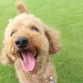 犬の歯周病