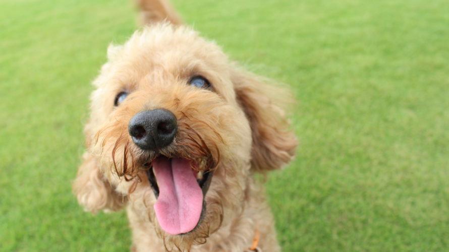 犬の歯周病チェックポイント!症状と治療、歯磨き対策まとめ