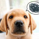 犬の風邪はうつる?犬風邪の原因や症状、治療や予防法