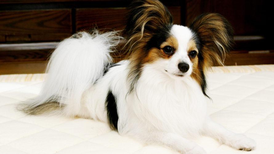 犬が軟便の場合の原因と対策は?嘔吐など危険なサインに注意!