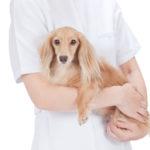 犬の感染症