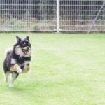 犬 グルコサミン