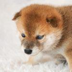 愛犬がドッグフードを食べない時の原因はどれ?原因と7つの対策