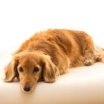 【犬のストレスサイン】に気付く!原因と解消方法