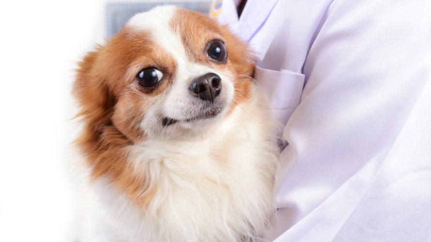 犬の赤血球数値