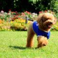 犬のペット保険