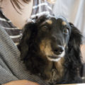 老犬 食事 介護