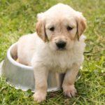 後悔しない子犬の選び方!入手先と健康状態の確認ポイント