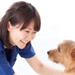 犬 ペットホテル