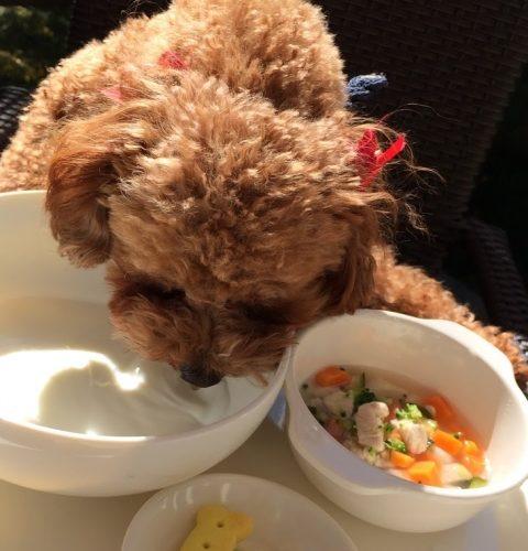 犬の食事の時間
