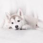 犬の肝臓がんの原因と症状、余命、食事、治療法について
