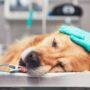 【獣医師監修】犬の癌(ガン)とは?症状・原因・種類・治療法について
