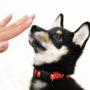 子犬のマウンティングをやめさせるには?4つの理由としつけ方法