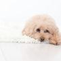 犬の血液検査のクロール値(Cl)で高い時、低い時に疑われる病気は?