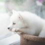 犬の急性膵炎は完治する?原因や症状、治療法について