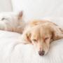 犬の咳が続く時に注意する病気は?原因と症状別対処法9選!