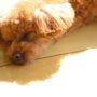 犬が痙攣したらどうすればいい?原因と対処で大切な5つのこと