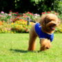 愛犬にペット保険は必要か?おすすめの選び方ポイント