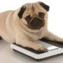 犬の肥満やダイエットに効果的な食事方法とは?